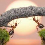 Sonhar com formiga é um bom sinal? Saiba o significado