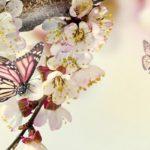 Insetos e espiritualidade – conheça essa relação