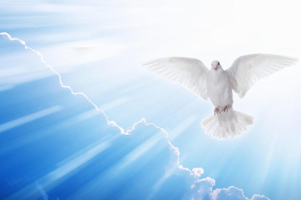 Entenda O Significado Da Pomba Do Espirito Santo Wemystic Brasil
