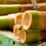 Bambu da sorte – a planta que atrai boas energias para a casa
