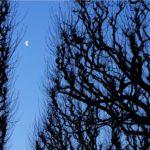 Lua Minguante: encerrando um ciclo, renovando projetos